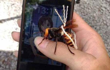 زنبور خطرناکی که اهلی شد ( عکس)