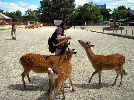 معرفی شهر زیبای گوزن ها (+ تصاویر)