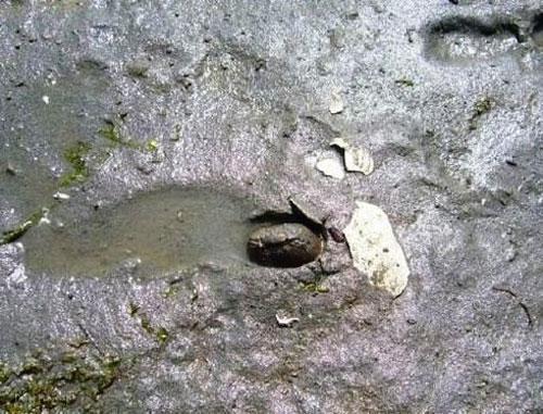 بزرگ ترین و عجیب ترین صدف های دنیا ( عکس)