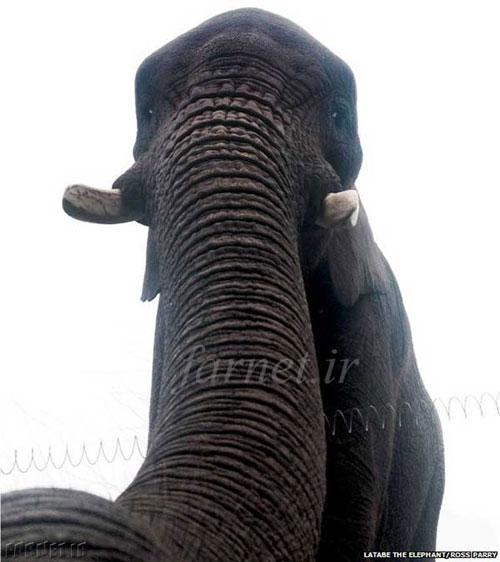 فیلی که عکس سلفی گرفت (عکس)