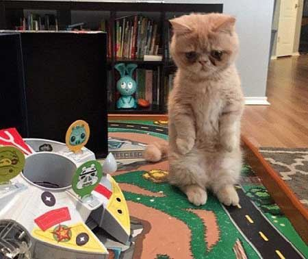 گربه ای بامزه که مثل انسان ها رفتار می کند + عکس