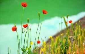 عکس های طبیعت زیبا و بهاری جاده چالوس