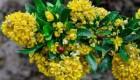 عکس های فوق العاده از شکوفه های زرشک در بیرجند