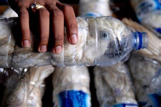 تصاویر ناراحت کننده از قاچاق بی رحمانه حیوانات