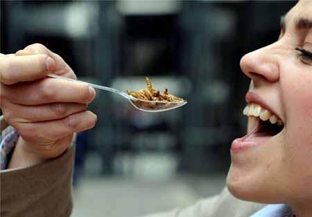 چندش آورترین غذاهای دنیا (عکس)