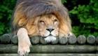 عجیب و دیدنی از دنیای حیوانات (تصاویر)