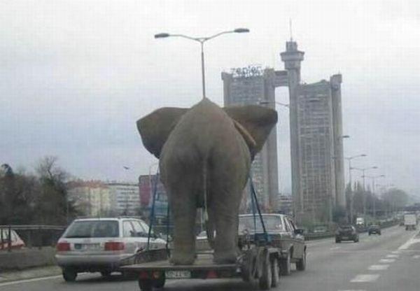 عکس های خنده دار از شیطنت حیوانات