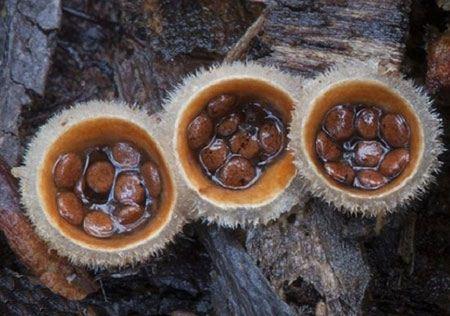 قارچ های طبیعی زیبا و رنگارنگ
