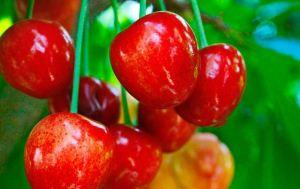 عکس میوه های فصل بهار