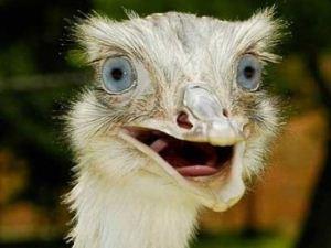 عکس های بامزه و دیدنی از تعجب حیوانات