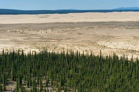 تصاویری از وجود عجیب کویر در وسط جنگل های سردسیر آلاسکا