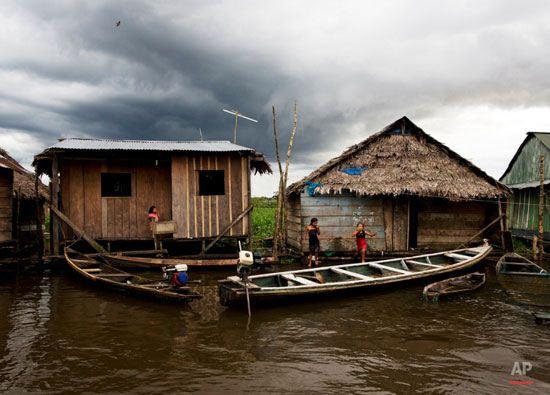 ونیز جنگل ها در آمازون + تصاویر