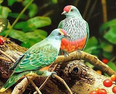 عکس های دیدنی از عشق پرندگان به یکدیگر