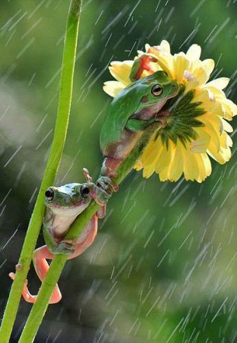 تصاویر دیدنی از ترفند قورباغه ها برای فرار از باران