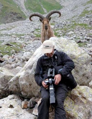 عکس های باحال و دیدنی از سلفی گرفتن با حیوانات