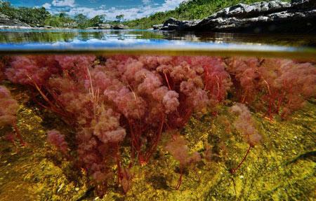 رودخانه شگفت انگیز رنگارنگ در کلمبیا + تصاویر