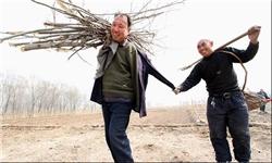 2 معلول شگفت انگیز چینی در حال ایجاد جنگل (+ عکس)