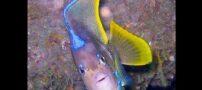 تصاویری از مخلوقات رنگارنگ در اعماق اقیانوس ها