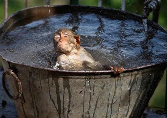 تصاویری از حیوانات و گرمای شدید تابستان