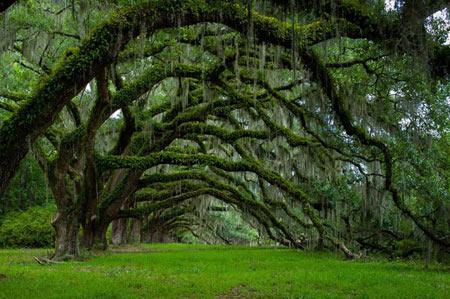 عکس هایی از شگفت انگیز ترین درختان جهان
