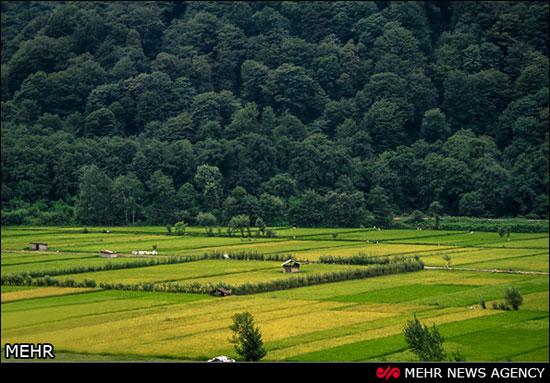 عکسهای از طبیعت زیبای شمال