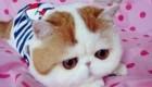 گربه ای بامزه که در اینترنت محبوب شده است + تصاویر