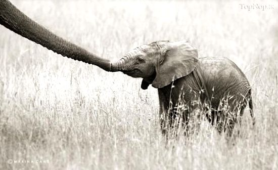 عکس های عاشقانه و دیدنی حیوانات