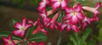 خطرناک ترین گل های زیبای جهان را بشناسید (+عکس)