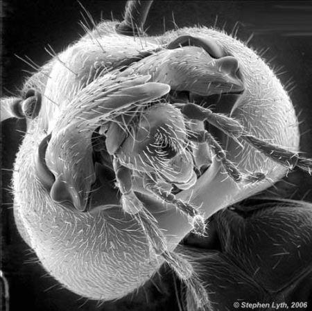 عکس های حیرت انگیز از لنز میکروسکوپ