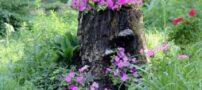 تبدیل تنه درختان به گلدان (عکس)