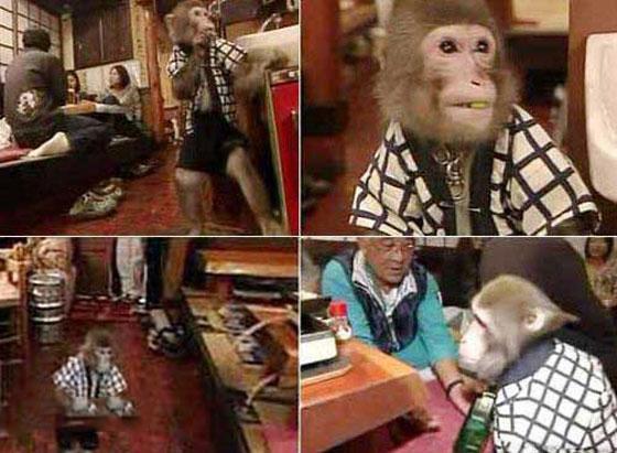 رستورانی جالب که توسط میمون ها اداره می شود