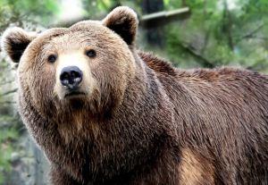 کشتن بیرحمانه یک خرس در کرمانشاه + عکس