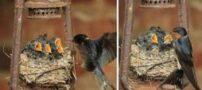 تصاویر دیدنی از عجیب ترین لانه پرندگان