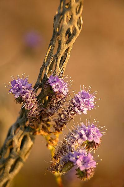 گل های زیبا و شگفت انگیز کمیاب (عکس)