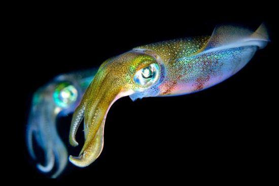 تصاویر بی نظیر از هیولا های اعماق دریا