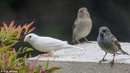 """زندگی این پرنده مثل """"جوجه اردک زشت"""" است + تصاویر"""