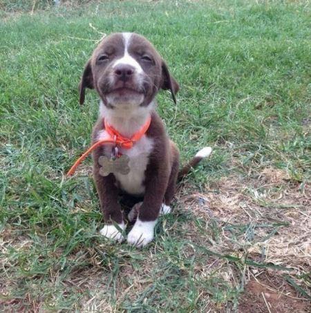 عکس های بامزه از ژست گرفتن سگ ها برای عکس
