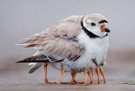 تصاویری زیبا از دنیای حیوانات