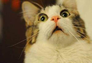 عکس های جالب از گربه ای در انتظار افطار