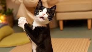 گربه ای که مجانی کایت سواری کرد + عکس