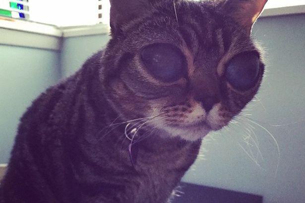 عکس های جنجالی گربه فضایی در اینستاگرام