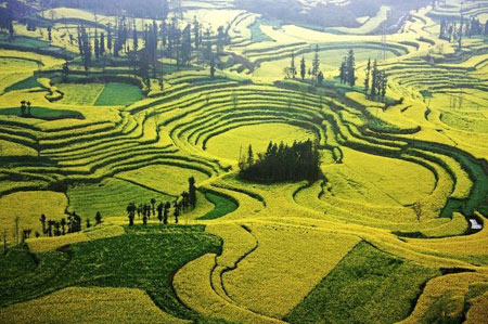 تصاویر دیدنی از دشت زرد رنگ در چین