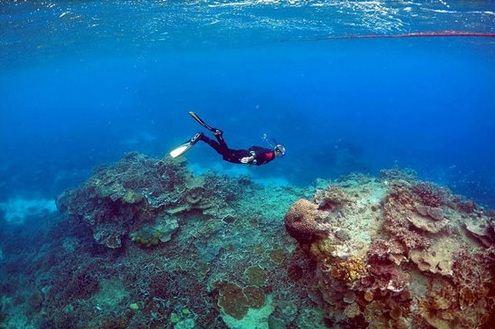 سواحل مرجانی زیبای استرالیا از بین می روند؟!