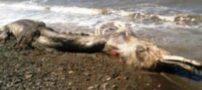 جسد عجیب الخلقه و زشت در سواحل روسیه + عکس