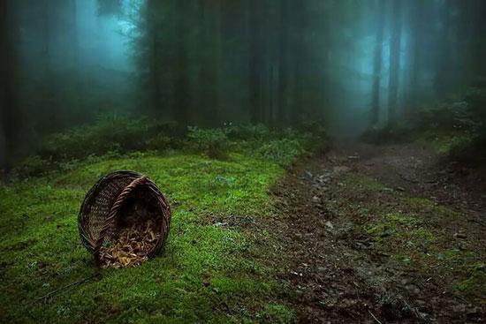دیدن ۱۵ جنگل شگفت انگیز دنیا ( تصویری)
