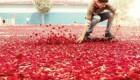 تبلیغ جدید سونی با باران گلبرگ ها + تصاویر