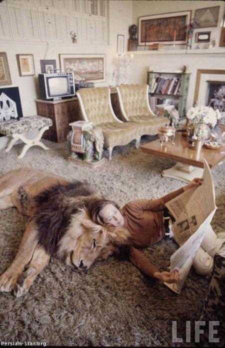 زندگی ترسناک یک خانواده با یک شیر + عکس