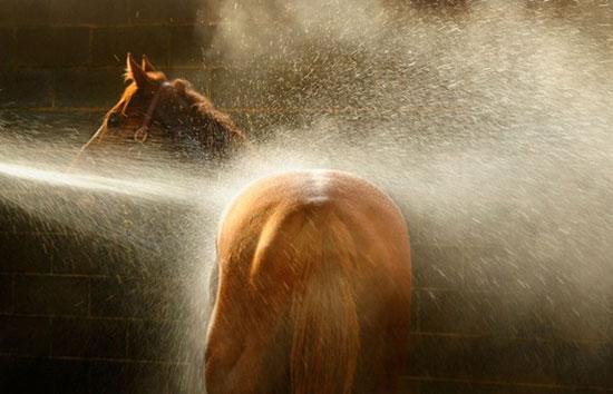 تصاویر زیبا و جالب از سوژه های خفن (20)
