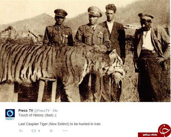 دلیل انقراض ببر مازندران + عکس