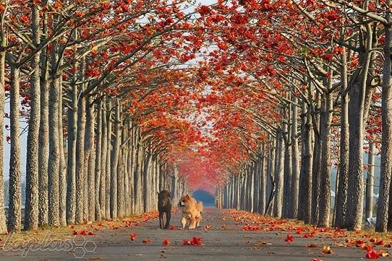 زیباترین خیابان ها در جهان + تصاویر